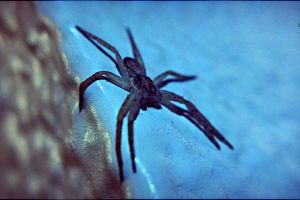 insect animals spider
