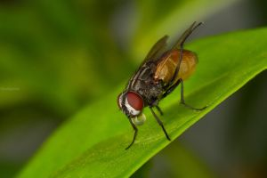 insect macro photography closeup bokeh nature wings