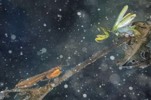 insect nature snow macro