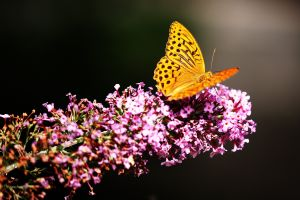 insect plants butterfly flowers animals