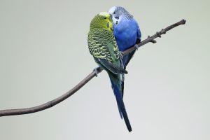 kissing animals birds