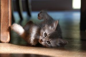 kittens cats mammals baby animals animals
