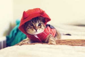 kittens hoods cats