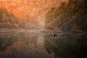 lake birds morning nature trees landscape mountains duck reflection fall water flying forest mist