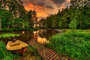 lake pine trees forest landscape