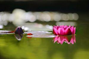 lake plants flowers