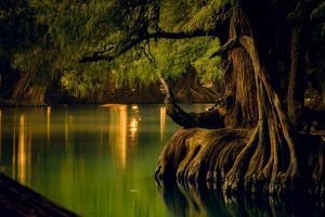 lake trees water mexico forest landscape reflection nature calm roots
