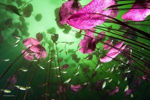 lake water animals