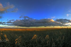 landscape field sky nature