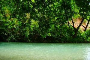 landscape greece trees shrubs water nature green spring river