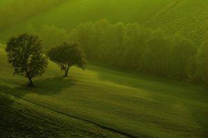 landscape green trees nature grass