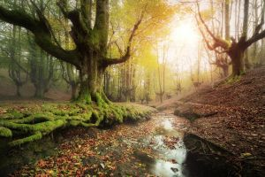 landscape hills forest fall leaves trees nature creeks water moss spain