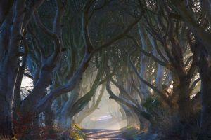 landscape ireland nature shrubs mist sun rays fairy tale tunnel morning road trees