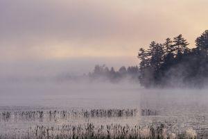 landscape lake mist trees morning