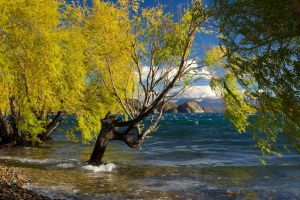 landscape lake mountains trees wind nature chile beach clouds