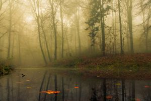 landscape leaves calm morning forest trees fall reflection water nature mist