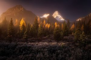 landscape mist canada fall trees grass mountains nature snowy peak forest