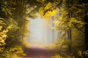 landscape mist forest path leaves sunlight morning trees nature fall