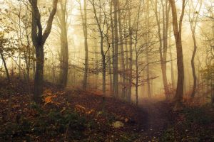 landscape mist trees fall nature forest path