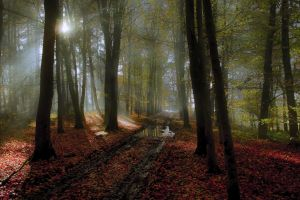 landscape nature forest water sunlight fall leaves path mist mud trees