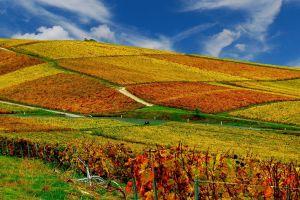 landscape nature landscape vineyard hills