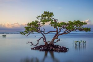 landscape nature leaves roots branch reflection calm horizon trees water plants island clouds