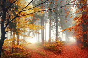 landscape nature morning path crossroads fall lights trees forest mist