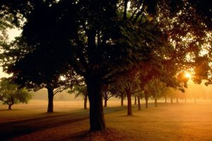 landscape nature photography trees