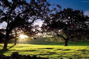 landscape nature trees sun
