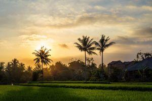 landscape palm trees palm trees