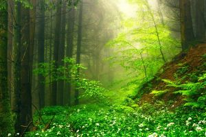 landscape path mist morning wildflowers moss nature shrubs forest trees green ferns