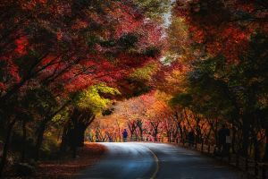 landscape people red yellow green nature tunnel road fall trees blue leaves