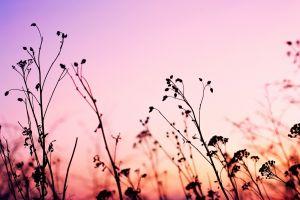 landscape pink photography nature plants