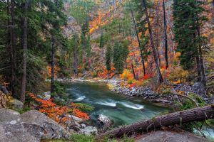 landscape river pine trees forest