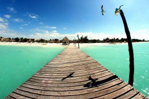 landscape sea birds mexico