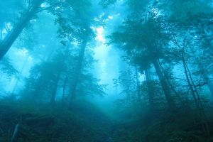 landscape shrubs path cyan nature trees forest switzerland sunlight blue mist