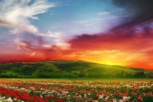 landscape sky plants flowers colorful
