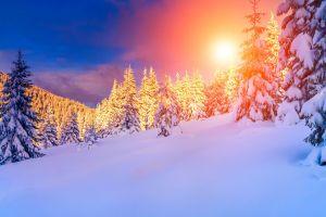 landscape snow pine trees