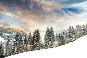 landscape snow trees