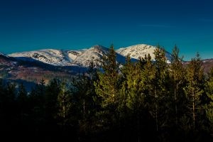 landscape snowy mountain mountains pine trees forest