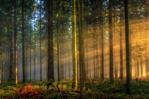 landscape trees forest grass mist sunlight germany nature morning sun rays