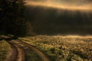 landscape trees mist grass path sun rays nature road