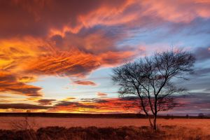landscape trees orange sky sunset skyscape plains