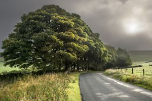 landscape trees road