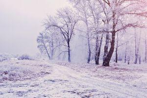 landscape trees winter mist nature path white snow