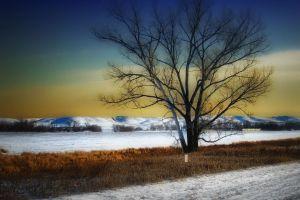 landscape winter snow hdr trees