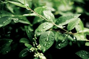 leaves depth of field branch plants water drops nature