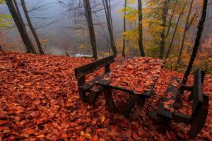 leaves fallen leaves fall nature bench