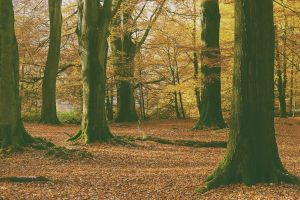 leaves forest filter tree trunk nature fall trees yellow