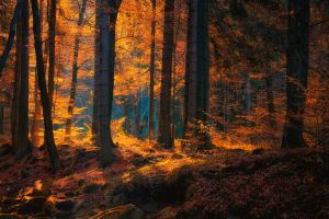 leaves forest trees nature fall sunlight landscape
